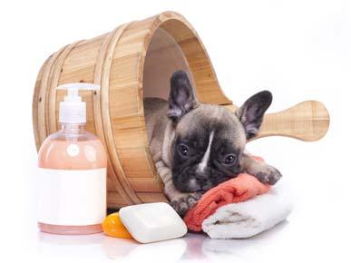 Dog Grooming Cronulla