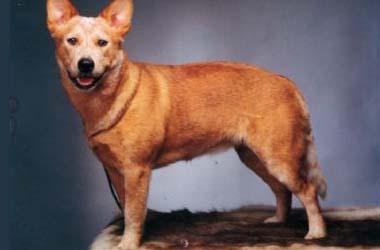 Dog Breeders Sydney