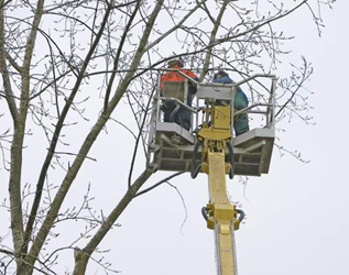 Able Arborist At Highland Tree Garden Service