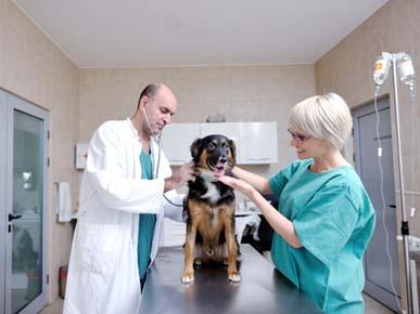 Vet Surgery Sydney