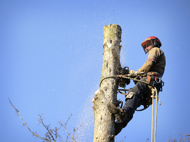 Tree Lopping Penrith