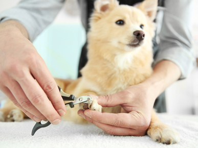 J & J Pet Services
