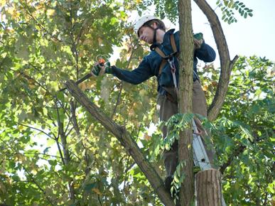 Tree Services Hurstville
