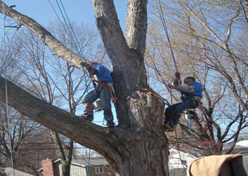 Sydneyside Tree Services