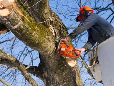 A BETTER CUT TREE SERVICES PTY LTD