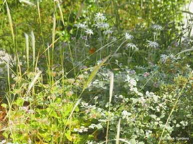Landscape Gardeners Eastern Suburbs