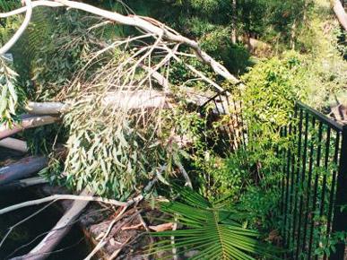 Tree Felling Central Coast