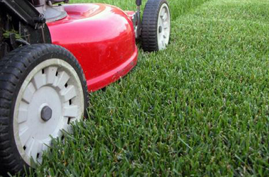 Peter Grass Lawn Cutting Service - Lawn Mowing Blacktown