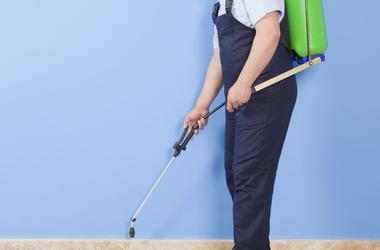 Expert Pest Control & Termite Services