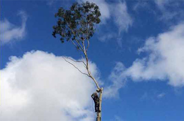 At Anytime Tree Services