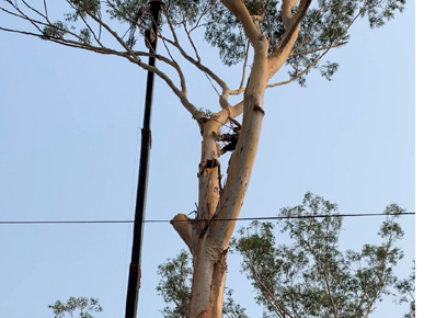 First Choice Tree Services