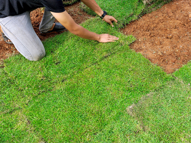 Lawn Mowing Service Campbelltown