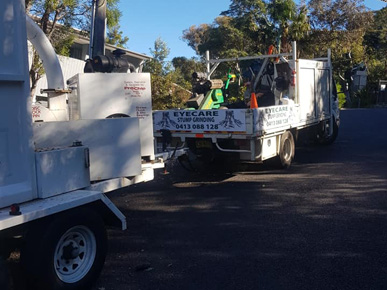 Eyecare Tree Services & Stump Grinding Services