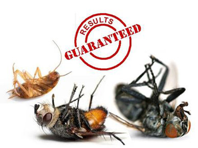 RNS Pest Control Management & Termite Inspection