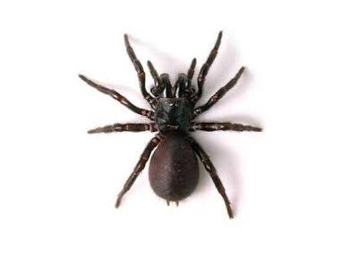 EndZone Pest Control
