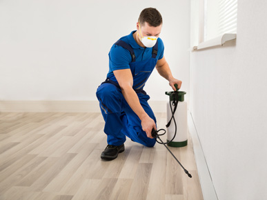 Affordable & Quality Pest Control Service