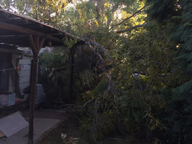Al's Tree Service