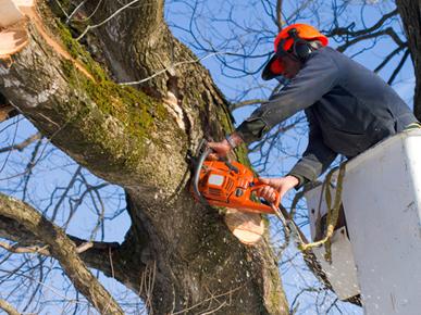 Sam's Fast Tree Lopping