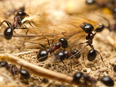 Emblem Pest Services