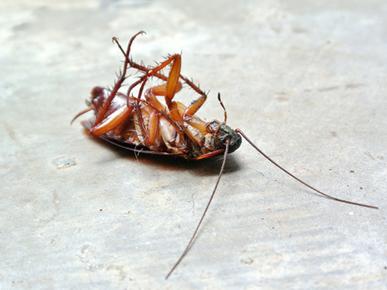 Phil's Pest Control