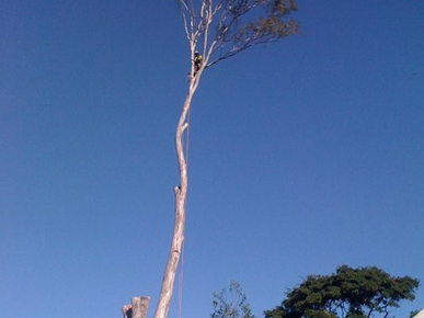 Tree Buster Tree Lopping - Brisbane