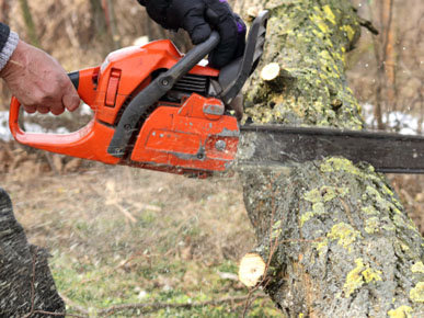 Northwest Tree Services