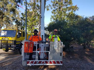 Sydney Arbor Tree Care