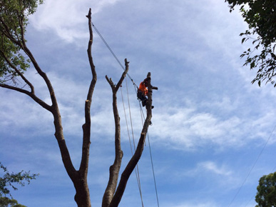 STS Safe Tree Services