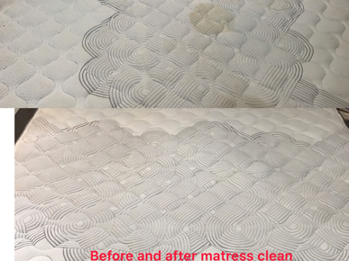 Speedy Gonzalez Cleaning Services - End Of Lease & Carpet Steam Cleaning Specialist