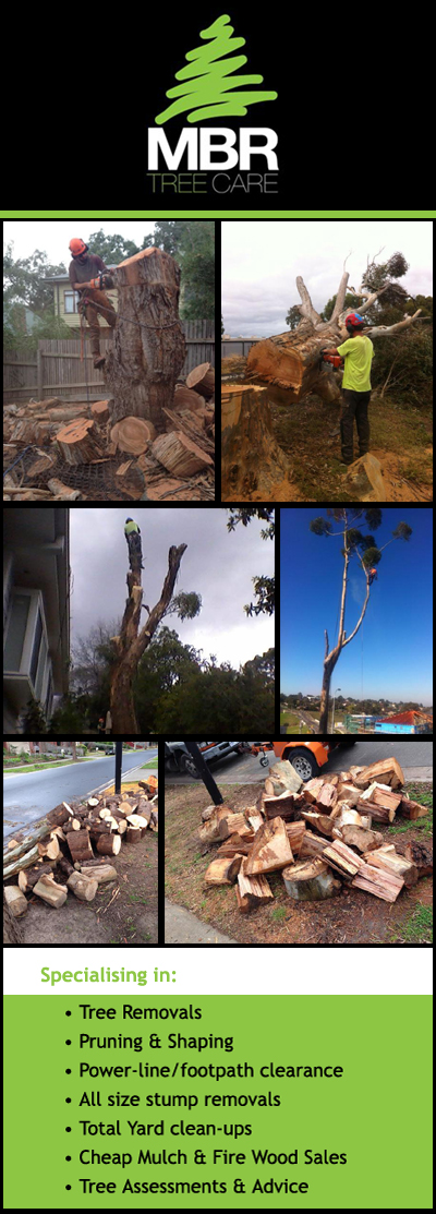MBR Tree Care