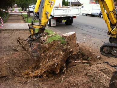 Extreme Arbor - Tree Removal, Stump Grinding, & Arborist